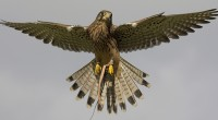 Come and join the team for a day! With our hands on bird of prey experiences running 7 days a […]