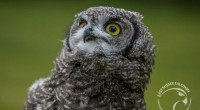 The ultimate experience for owl lovers is this experience to discover our nocturnal beauties. Owls are one of the most […]