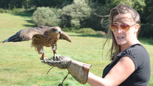 Kite experience!! Kimberley and Keanu are proving to be great additions to our team of raptors. East Sussex Falconry offers […]