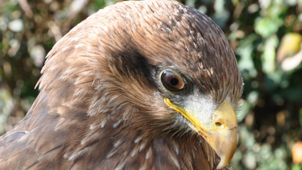 East Sussex Falconry, The original and still the best bird of prey experience provider in Hesrmoncuex. Location Herstmoncuex castle. A […]