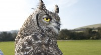 East sussex falconry have true owls and a barn owl! Why not join us in the grounds of Herstmonceux castle, […]