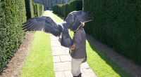 East sussex falconry offer very hands on falconry courses,and also offer raptor training for your new bird! these spaces are […]