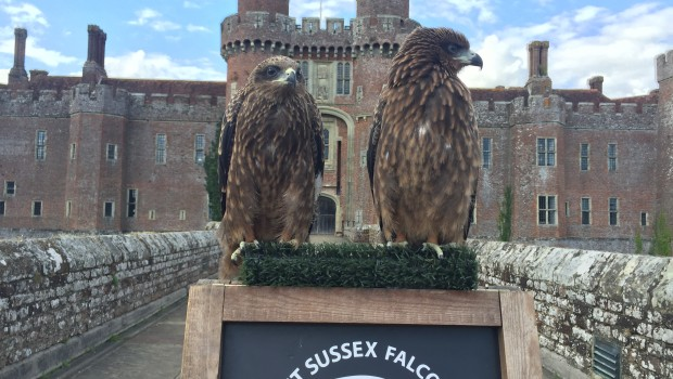 Castle connections, celebrating the castle at the heart of the community. East Sussex Falconry, come and see our team of […]