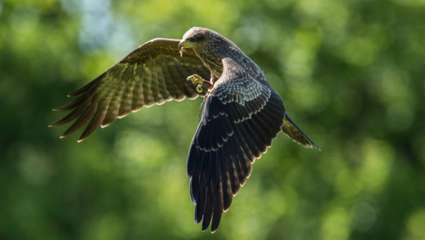 Bird of prey experiences, offering you the chance to fly a large variety of raptors, all in the grounds of […]