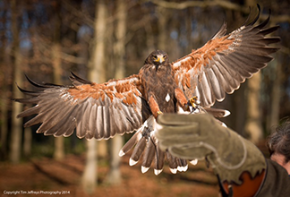 How to book a day with East Sussex Falconry Go online and order a gift voucher, these are sent by […]