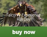 falconfullday