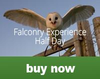 falconhalfday