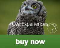 owlexperience